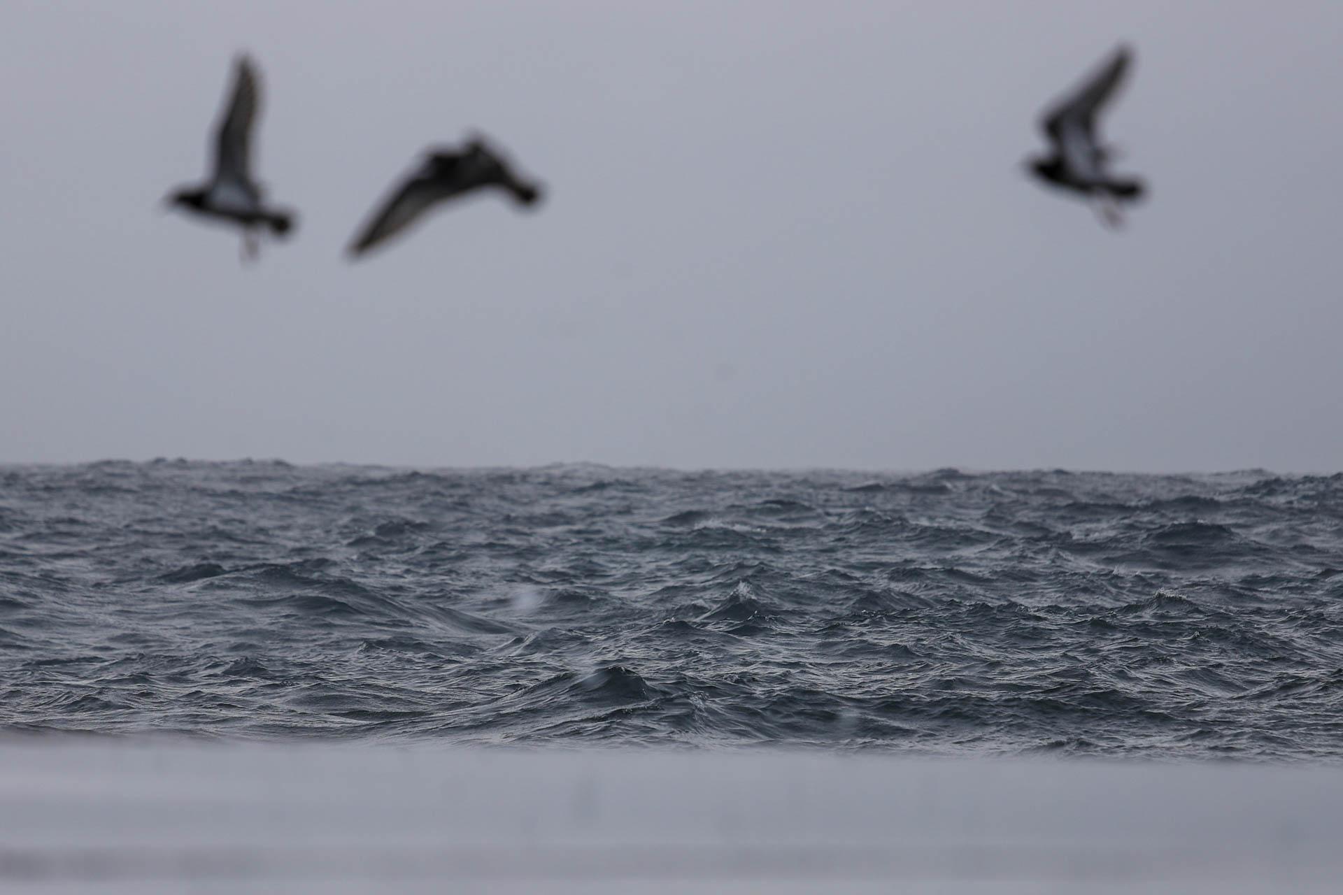 grey ocean